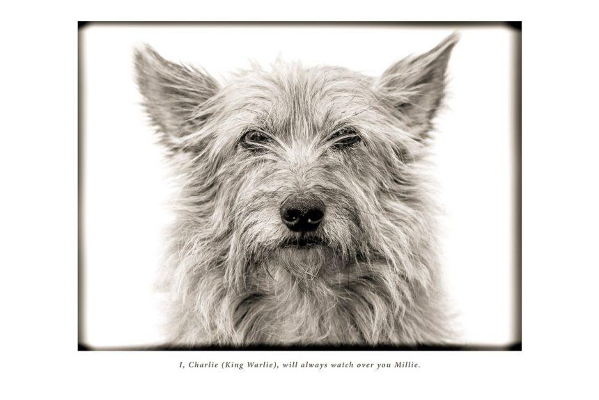 Preparing for the loss of a beloved family pet – could it help you?